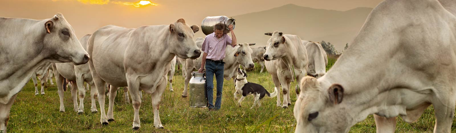 Milk and farmers